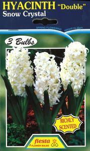 Hyacinth Double Snow Crystal