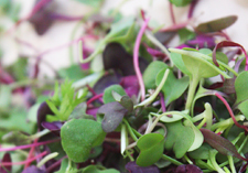 grow fresh sprouts, at home